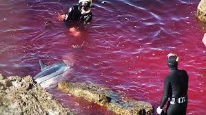dolphins-massacre