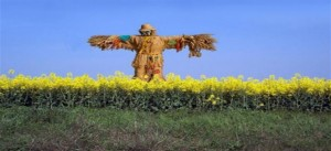 Scarecrow_standing
