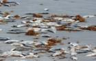 Dead-Fish-Mass-Death-Sea-Ocean