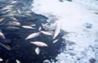 Fish-Deaths-Public-Domain-460x303