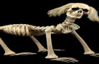 shadow-skeleton-dog1